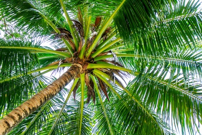 Turning Your Sarasota Backyard into a Lush Tropical Escape