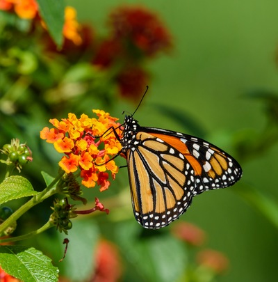The Best Plants for Your Sarasota Butterfly Garden